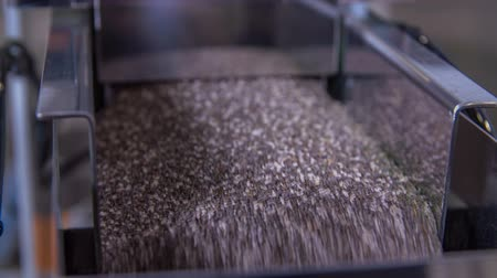 latex gloves : There are lots of chia seeds on a machine, someone turns it one and the seeds travel down the conveyor belt.