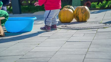 tykev : A small girl approaches a big blue bucket which is standing on the ground. Her mom is cleaning the pumpkins and is putting pumpkin seeds into this bucket. Dostupné videozáznamy