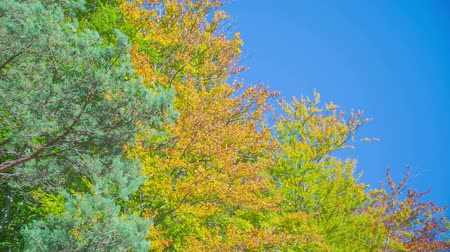 cesta : Beautiful green and yellow leaves on trees. The sun is shining and its a nice and warm day. The nature is gorgeous. Vídeos