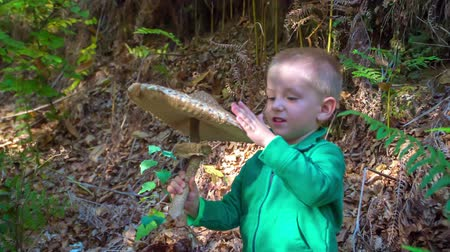 wrzesień : A young boy is gently touching a big mushroom in his hands. He is walking in the forest together with his family.