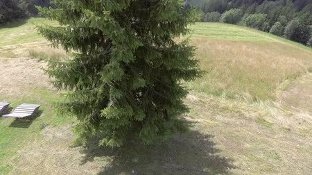 balya : A big spruce is standing in the middle of a meadow and a farmer on a tractor is driving around it to cut grass.