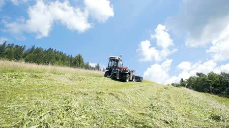 hay mowing : A tractor is driving uphill and it is cutting grass with the gracc cutting machinery.
