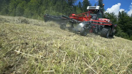 hay mowing : Its a hot summer day and farmers are preparing hay. The hill is very steep.