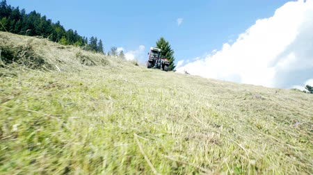 hay mowing : A tractor is driving uphill on a steep hill on a hot summer day and it is moving hay around. Stock Footage