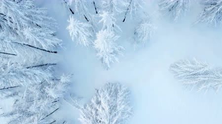 шале : The landscape is beautifully white. There is a lot of snow on the trees. Aerial shot.