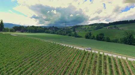dem : A car is driving on a country road and is passing a beautiful green vineyard. The countyrside looks magnificent in summer months.