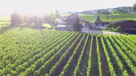 dem : There are lots of green vineyards in the middle of Slovenia. A guesthouse is located in the middle of it. Aerial shot. Its summer time.