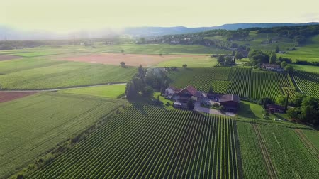 viticultura : Beautiful green countryside. There are many green vineyards and hills and forests in Slovenia. Aerial shot. Stock Footage