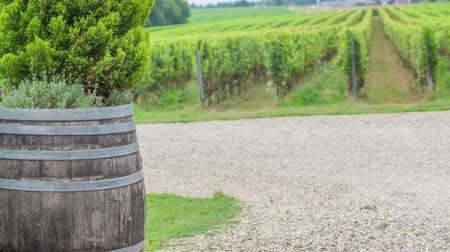 A beautiful and green vineyard is in the background. A wooden a barrel is standing next to the road. Stock Footage