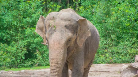 A beautiful elephant in the zoo. Its a nice summer day outside and visitors are watching the animals. Stock Footage