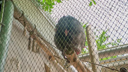pecsét : Chimpanzees are sitting on branches in their cage. Its a nice summer day. Visitors are having fun in the zoo. Stock mozgókép