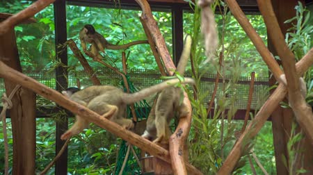 young elephants : Monkeys are on branches in the zoo. Theyre eating some leaves and visitors are observing them.