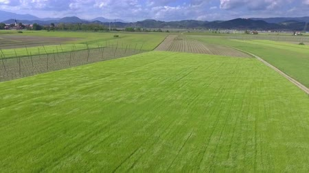 hops : We can see a nice green meadow and lots of beautiful plains around. This is gorgeous Slovenia.