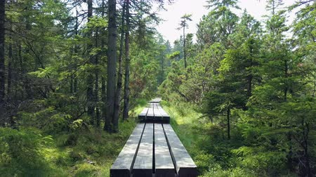 rybníky : The sun is shining on a beautiful green grass in the forest. We can also see a wooden path. It looks very peaceful.