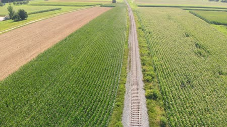 entre : Beautiful green fields and a railway is leading in between. Its a gorgeous summer day. Aerial shot. Vídeos