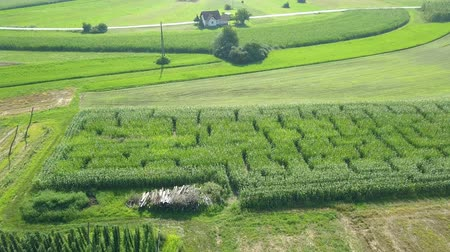 slovinsko : Someone has created amazing pattern on the corn field. The nature is green and beautiful. Its summer time.