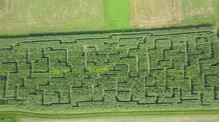 slovenya : There are fascinating green patterns seen on the corn field. Raised-relief map. Aerial shot. Stok Video