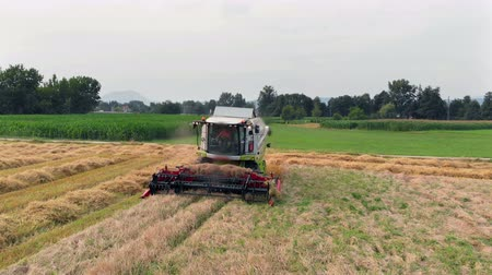 slovenya : We can see the front part of the combine spinning around. The farmers are harvesting wheat in the summer time. They really have a lot of work to do. Stok Video