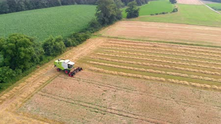 slovenya : A farmer is driving a combine and he is harvesting wheat on a huge field. Aerial shot. Stok Video