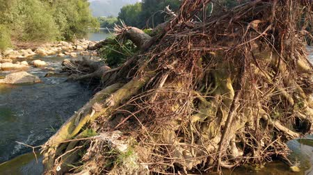 most : We can see a big, fallen tree in the river. It must have fallen during some storm. Dostupné videozáznamy