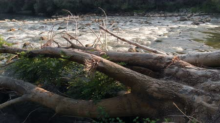 most : A tree trunk is lying in the water. It must have been lying there since a storm that happened out here.