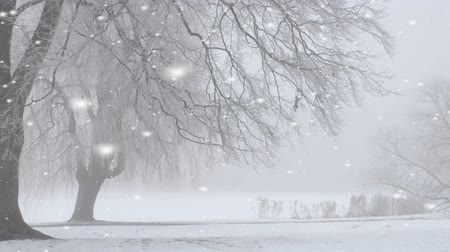 kar fırtınası : Winter snow storm with large white snowflakes falling across a wintry landscape with bare branched trees