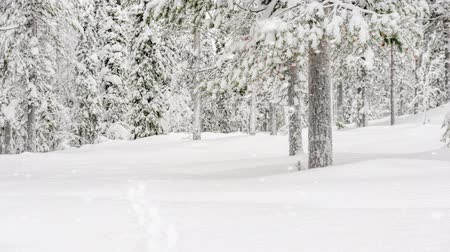 país das maravilhas : Snow covered forest in a snowstorm Stock Footage