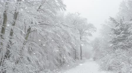 sniezynka : Falling snowflakes on a country road with trees