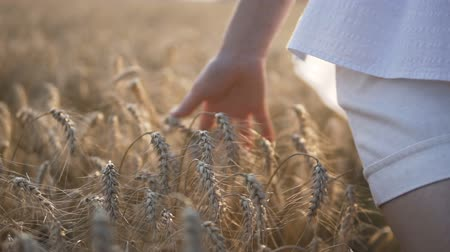 polního : Woman wearing white shirt runing through wheat field and touch ears by hand, sunset shot, 120FPS slowmotion