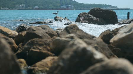 gaivota : Beautiful seagull resting on the rocky seaside, indoor shot on hot summer day as waves lapping