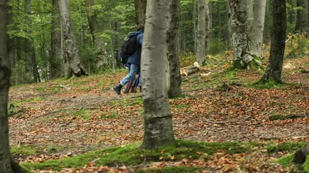 bengala : Couple of friends using trekking poles as walking in amazing mountain forest on peaceful autumn morning Stock Footage