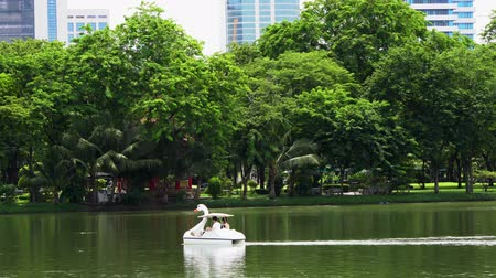 cisne : BANGKOK - JULY 21, 2017: Tourists in a swan paddle boat on the lake in Lumphini Park, Bangkok Vídeos