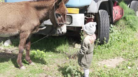 munch : A bold little girl feeds a big donkey on the farm. The animal is standing by the truck, the baby brings the dried carob fruit to his face