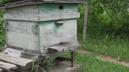 worker bees : Many bees fly in the hive. Old bee uli on the farm. Bees carry nectar to the lodge