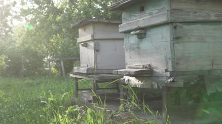 worker bees : Bees fly to the hive. Old retro beehives with bees at sunset