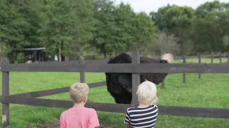 pštros : Two blond boys watch an ostrich on a farm. Dostupné videozáznamy