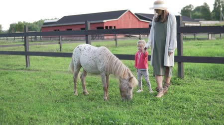 udder : mother with her little daughter petting a cute pony on a farm. A beautiful sunset stroll through the farm with a charming pony