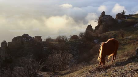 wideangle : Horse grazing in the mountains on a cloudy sky background (Full HD) Stock Footage