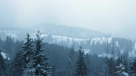 forest : Snow Falling in Carpathians (Full HD)