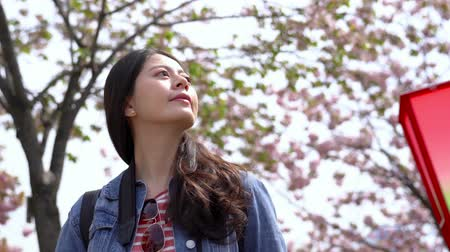 japonsko : the upward view of a woman lookign around and admiring the beautiful landscape of blossom cherry flowers. Dostupné videozáznamy