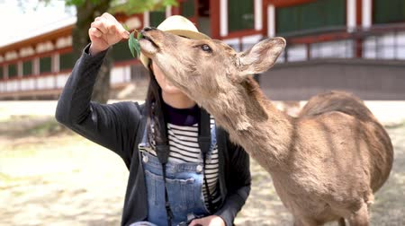 crouch : beautiful traveler joyfully feeding the hungry deer with leaf