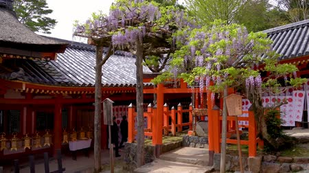 hanglamp : inside red Japanese temple standing trees with beautiful purple flowers