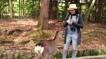 ukłon : attractive female tourist feeding cute brown deer with a joyful smile on face Wideo
