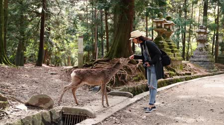 cortes : female tourist holding camera and feeding deer, after eating the polite deer nods head saying thanks