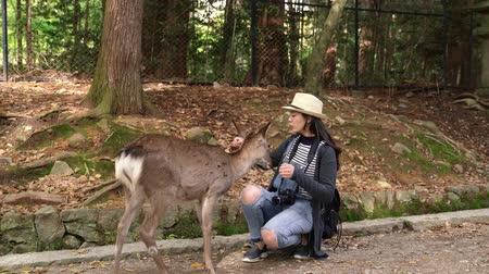 ukłon : beautiful female tourist carrying slr camera, crouching and feeding the deer Wideo