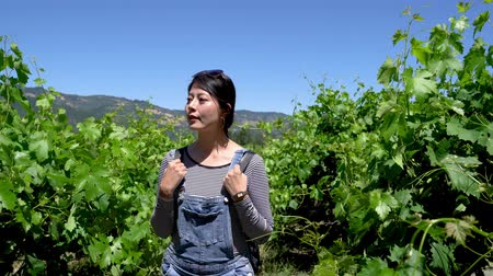 tasting : elegant beautiful asian woman traveler walking in winery vineyard outdoors. chinese female smiling backpackers at farm house relax under sunshine with green plants on spring and blue clear sky. Stock Footage