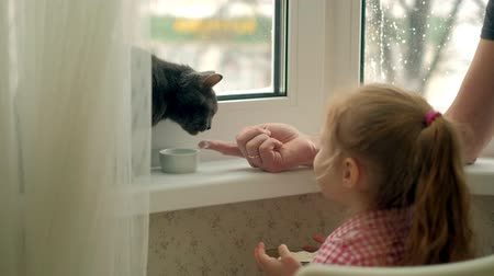 koťátko : a little girl is feeding a cat sitting by the window Dostupné videozáznamy