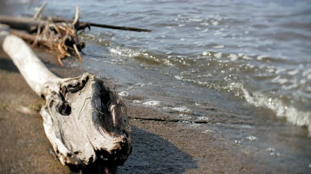 algi : A lot of wooden branches and logs lying along the river bank in the sand