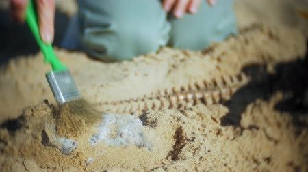 dinosaurus : The woman is engaged in excavating bones in the sand, Skeleton and archaeological tools. Dostupné videozáznamy
