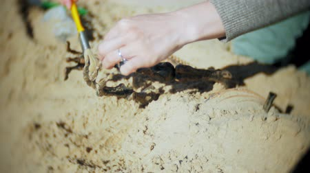 dinosaur : The woman is engaged in excavating bones in the sand, Skeleton and archaeological tools. Stock Footage